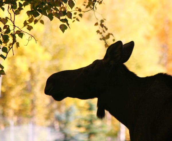Alaska - Wildnisse Alaskas: Bären, Lachse, Gletscher