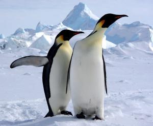 Antarktis - Antarktis mit Falkland-Inseln und Südgeorgien