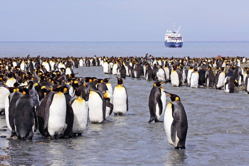 Antarktis - Die große Reise