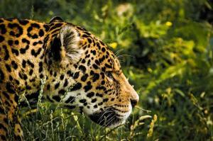 Belize - Geheimnisumwobene Maya-Kultur, immergrüner Dschungel und verführerischer Kakao