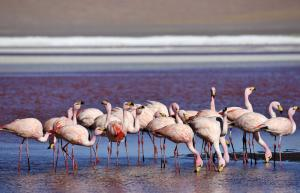Brasilien • Bolivien - Naturwunder Pantanal und Salar de Uyuni