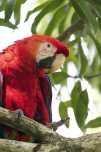 Costa Rica - Das Beste Costa Ricas