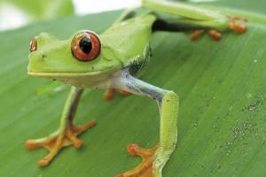 Costa Rica - Kuba - Schätze Mittelamerikas