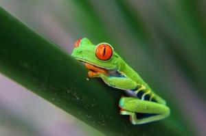 Costa Rica - Quetzal, im Reich des Göttervogels