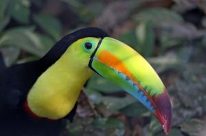 Costa Rica - Versteckte Paradiese