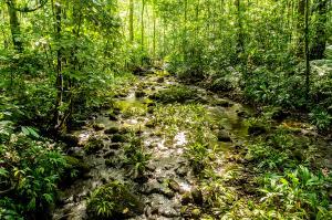 Costa Rica  -  Wandern, Staunen und Genießen