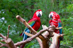 Costa Rica: Sternstunden