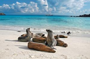 Ecuador & Galapagos: Höhepunkte