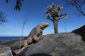 Ecuador • Galapagos - In den Regenwald und auf Galapagos-Kreuzfahrt