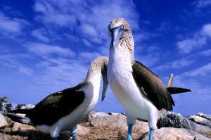 Ecuador und Galápagos  -  ein Land voller Wunder