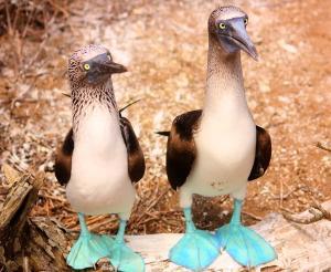 Galapagos-Inseln - Insel-Hopping: Reise in die Urwelt