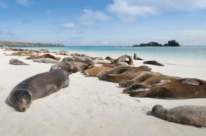 Galápagos aktiv