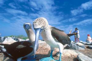 Galápagos mit dem Schiff entdecken