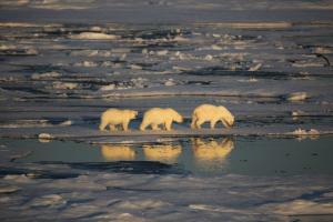 Grönland • Kanada   Nunavut - Klassische Nord-West-Passage und Höhepunkte Westgrönlands