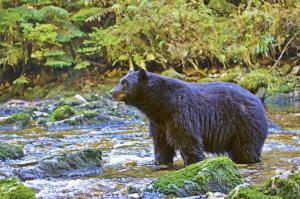 Kanada - USA | Yukon - Alaska - Golden Circle im Licht des Fotografen