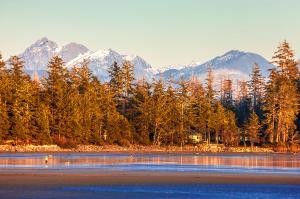 Kanada  -  Goldener Ahorn