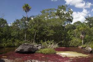 Kolumbien - Tafelberge, blühende Flüsse und Walbeobachtung