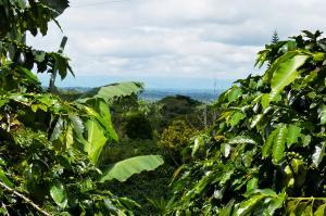 Kolumbien  -  Kaffeeduft und Karibikzauber