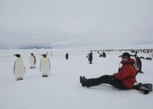 MS ORTELIUS: Kaiserpinguine im Weddell Meer