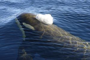 MS PLANCIUS: Antarktische Halbinsel - Aktiv über den Polarkreis