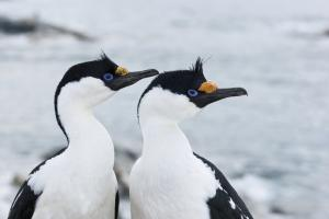 MS PLANCIUS: Die Antarktische Halbinsel - Basecamp