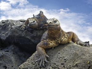 M/C ANAHI: Ecuador und Galápagos-Inseln