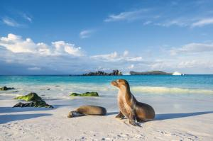 M/C ANAHI: Galápagos-Inseln intensiv