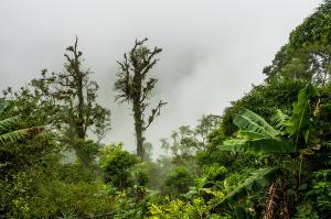 Meeresbrise und Costa Rica