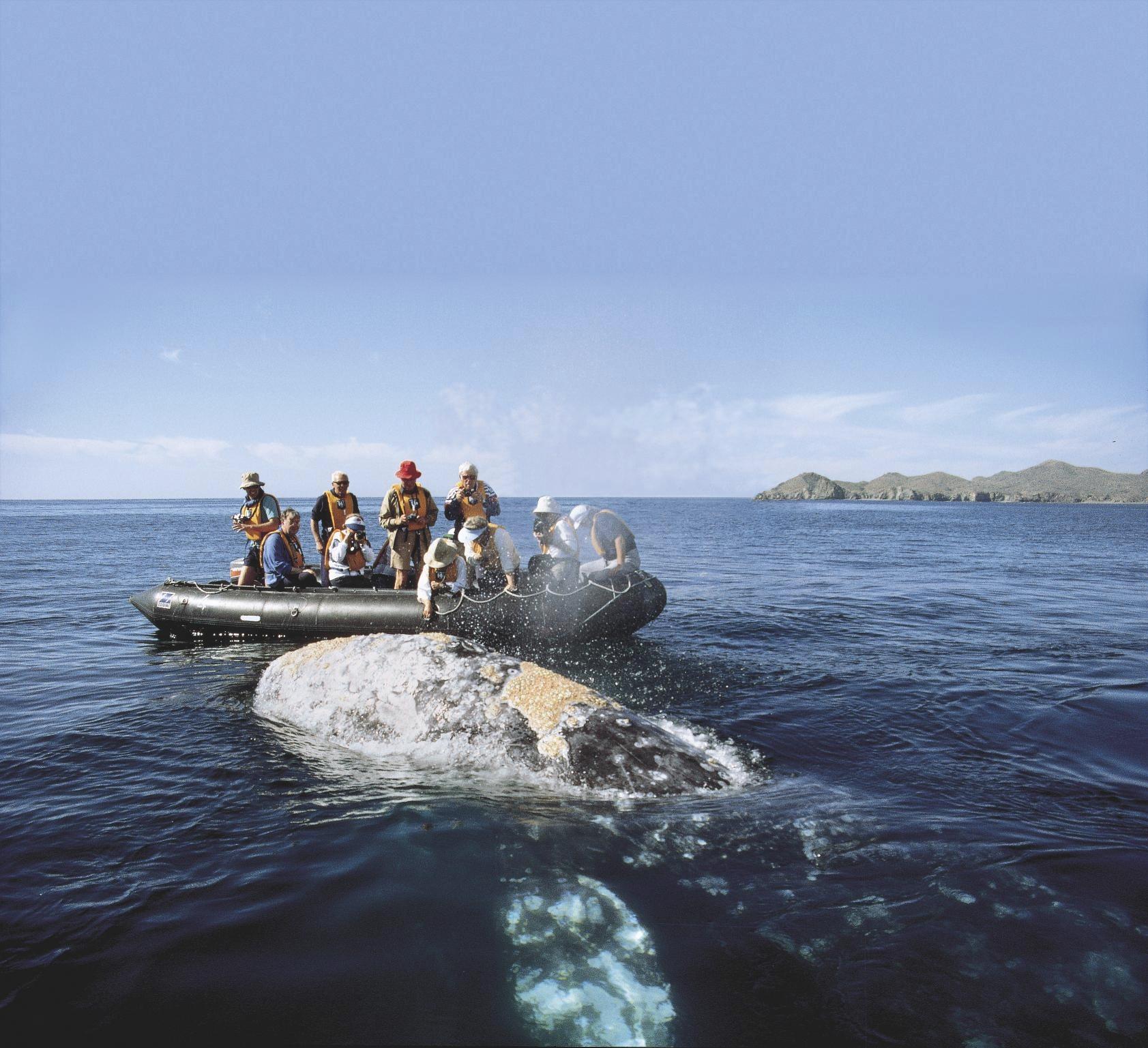 Naturreise Baja California