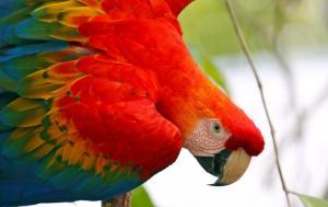 Peru • Bolivien • Brasilien - Wild! Ungezähmt! Transamazonica!