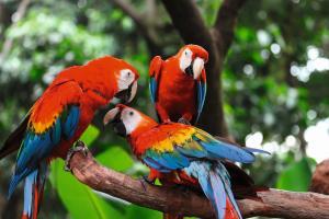 Peru: Die ausführliche Reise