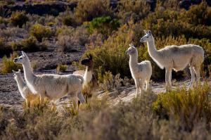 Peru und Bolivien  -  Schätze der Anden