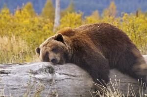 RCGS Resolute: Labrador und Torngat Mountains