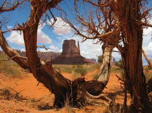 USA   Südwesten - Land der Canyons (ab Las Vegas/an San Francisco)
